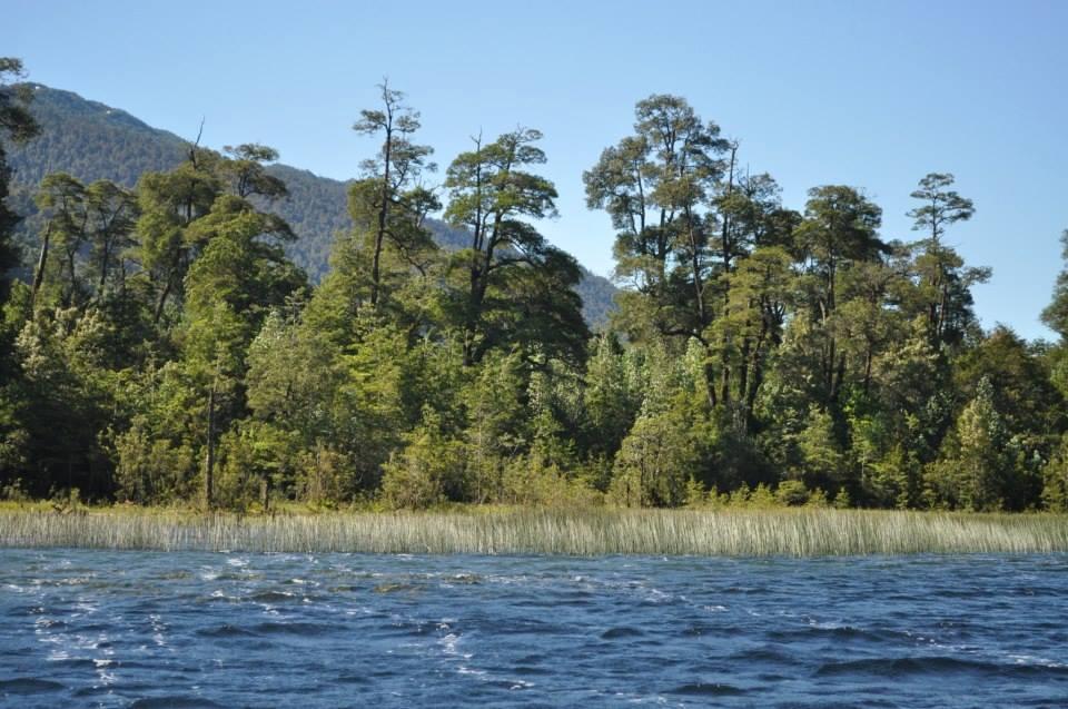 Lago Risopatrón