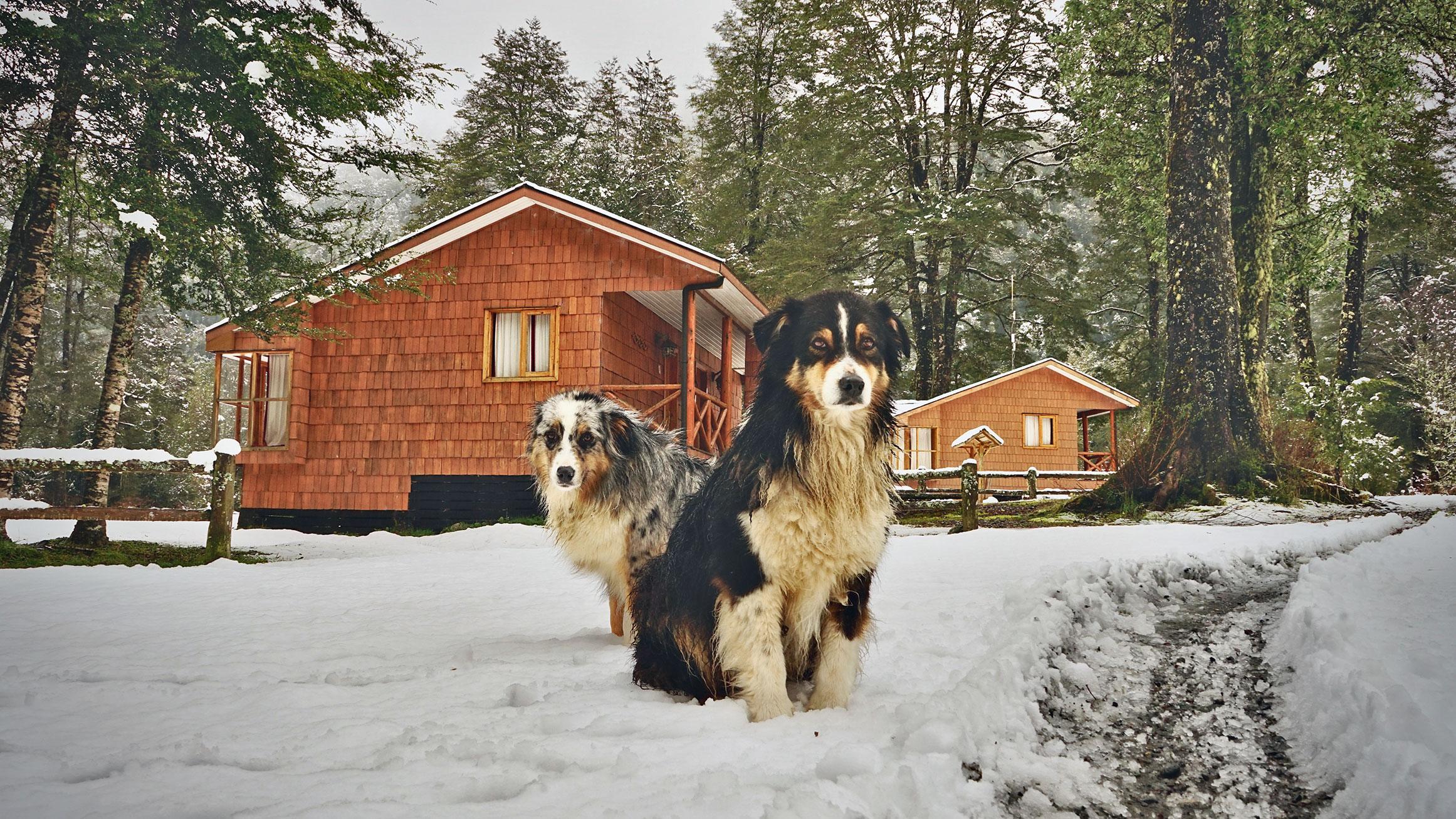 Las mascotas del Pangue Lodge en invierno