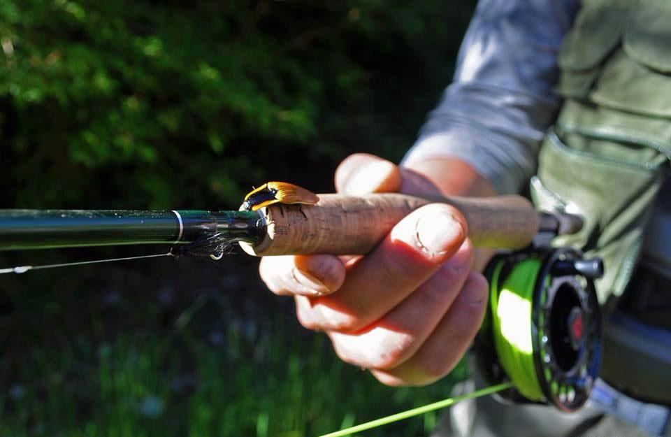 pesca con mosca, insecto